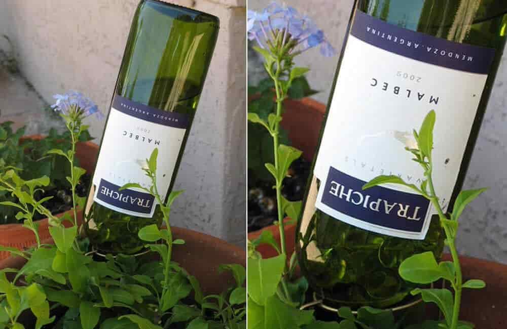 Wine Bottle Plant Waterer