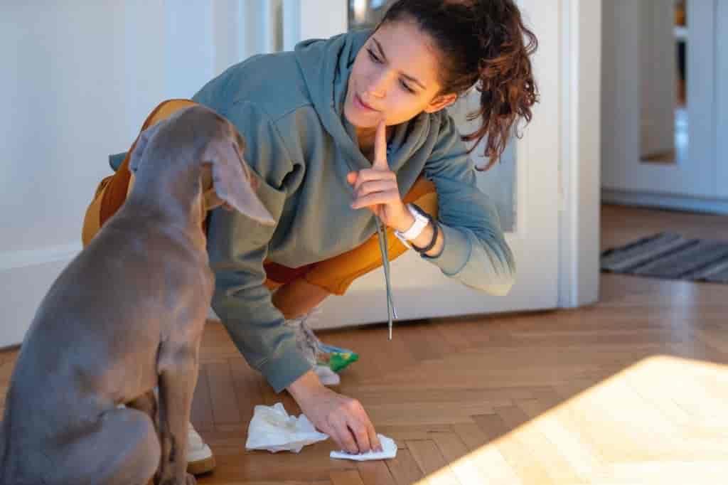 best treats for dog training
