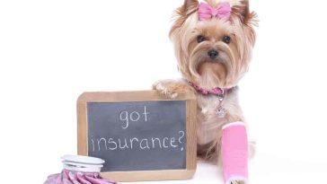 8 Tips for Choosing Pet Health Insurance